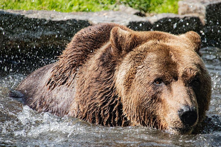 """El oso ruso: ¿por qué es el """"símbolo"""" del país?"""